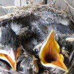 Baby Robins Garden 2