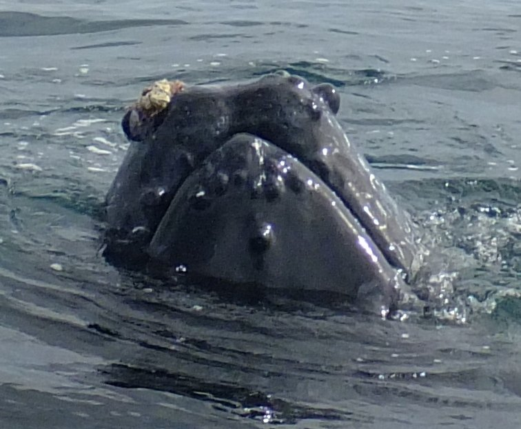 whale_04